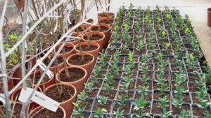 semilleros y arboles
