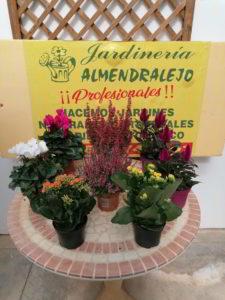 flores decoracion viveros de tiza