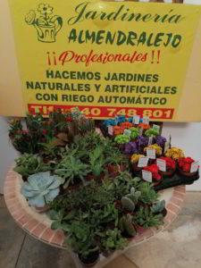 pequeños cactus viveros de tiza