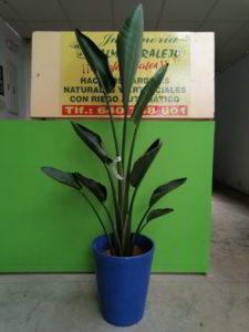 planta de interior alta viveros de tiza
