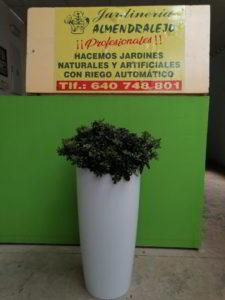 planta de interior pequeña viveros de tiza