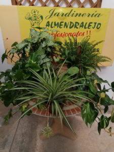 plantas diversas de interior viveros de tiza