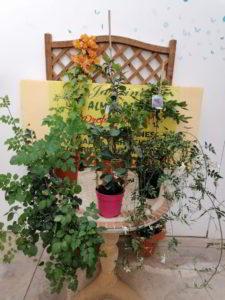 plantas varias de interior viveros de tiza